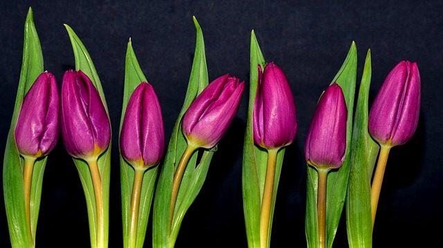 Substancje roślinne w kosmetykach
