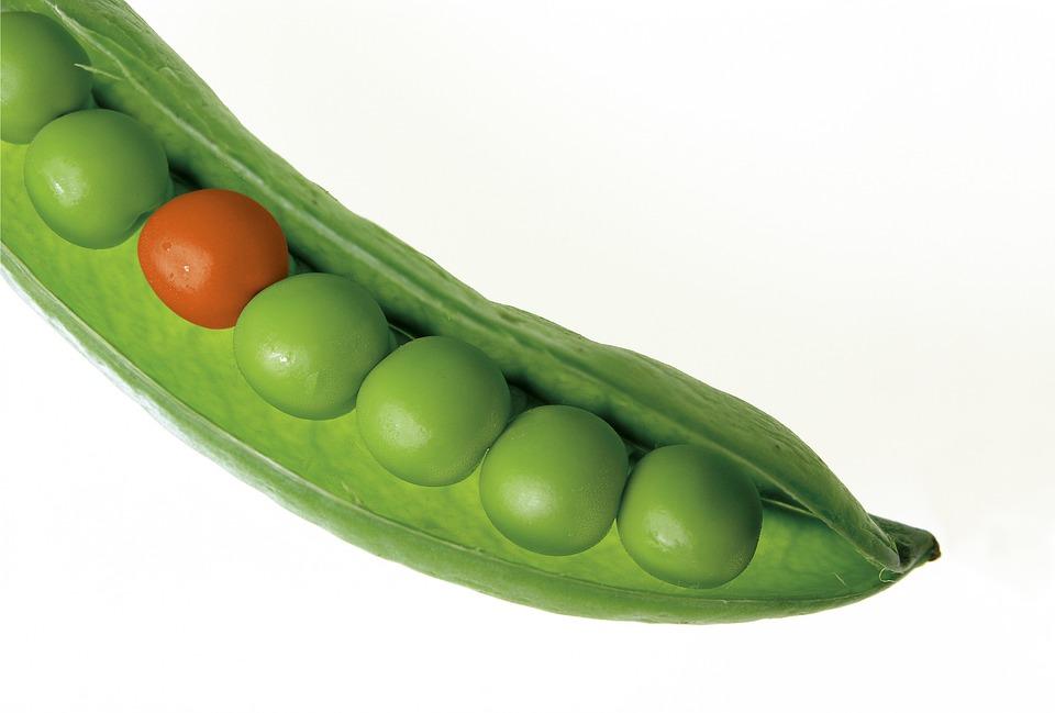 https://pixabay.com/pl/groch-pod-groszku-zielony-%C5%9Bwie%C5%BCe-580333/