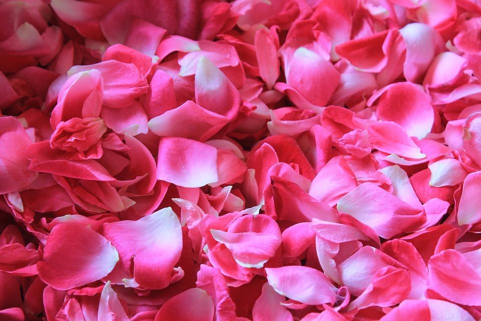 https://pixabay.com/pl/p%C5%82atki-r%C3%B3%C5%BC-kwiat-potpourri-1155147/